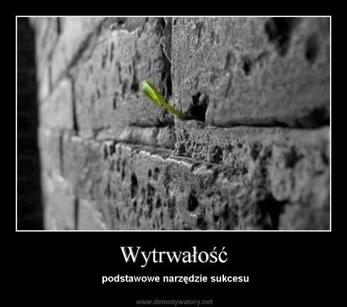 Wytrwali.pl - 10 najlepszych obrazków o wytrwałości, miejsce 2